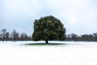 320 blackheath greenwich snow 90